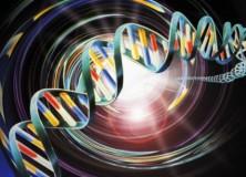 Svelata la sinfonia della vita, le proteine vibrano come le campane